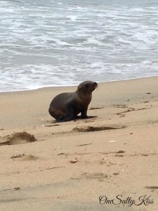 The Heartbreaking Sea Lion Crisis